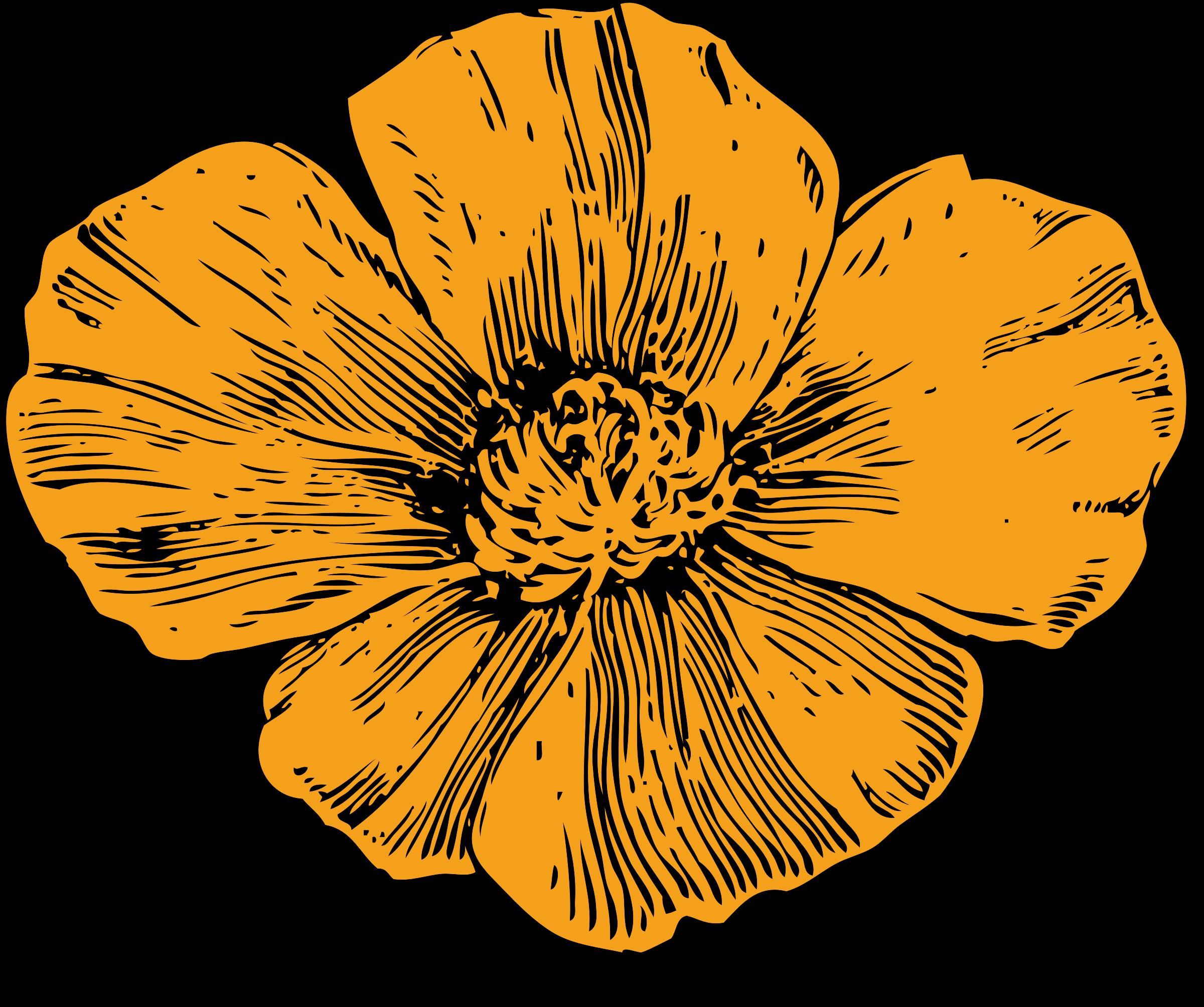 Poppy flower clipart image transparent download Clipart - California poppy image transparent download