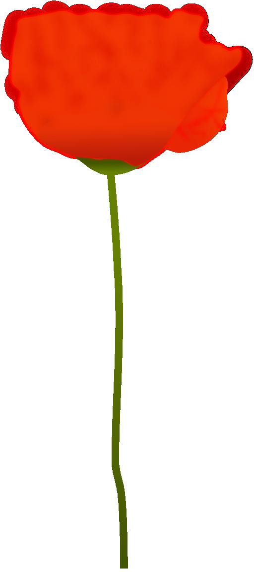 Poppy flower clipart vector free Poppy Flower Clipart   i2Clipart - Royalty Free Public Domain Clipart vector free
