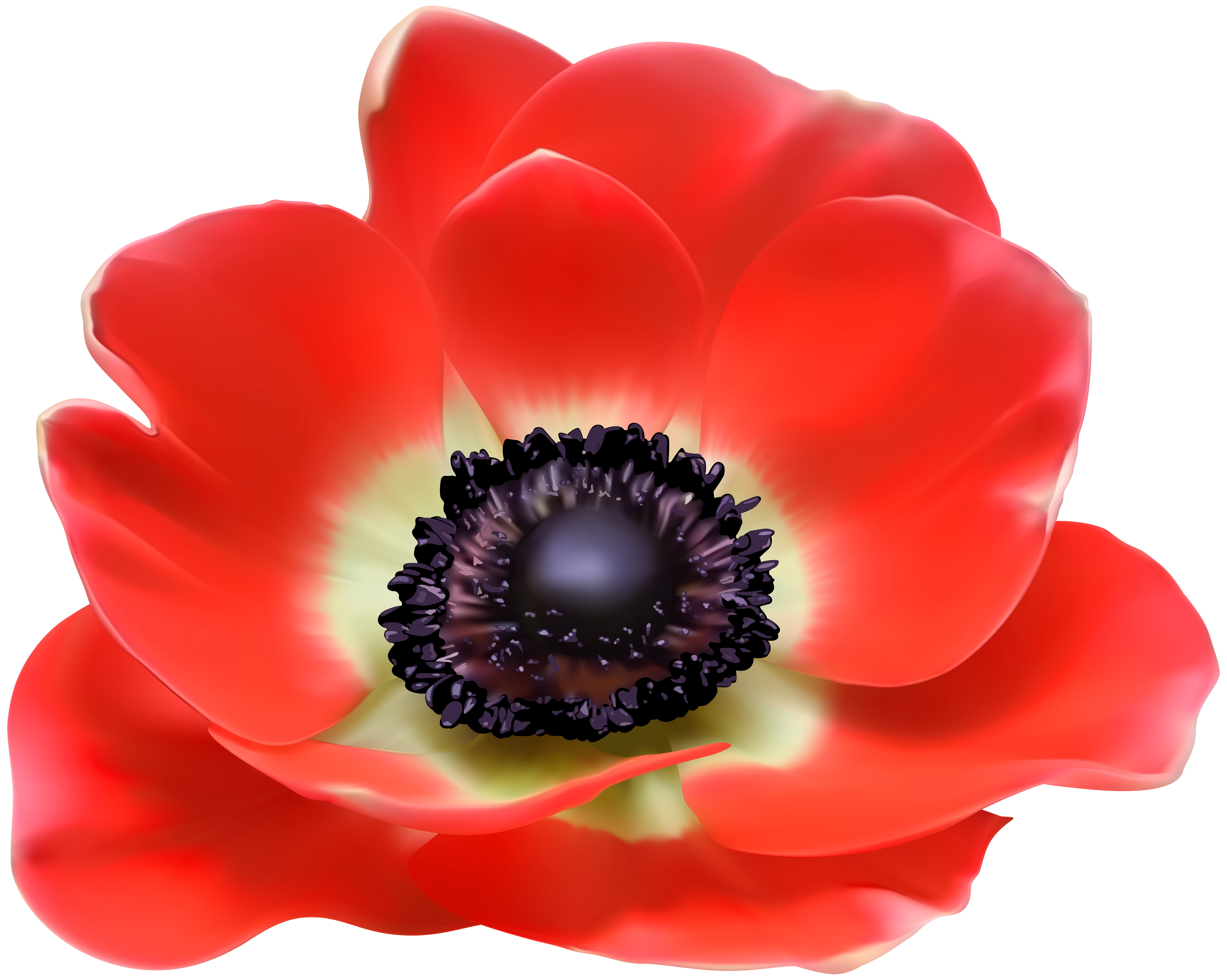 Poppy flower clipart library Poppy Euclidean vector Clip art - Red Flower PNG Clip Art Image 6000 ... library