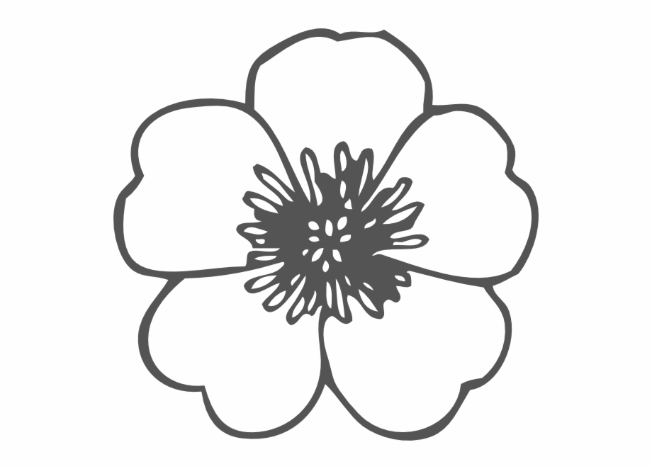 Poppy outline clipart picture freeuse stock Poppy Clip Art At Pngio - Flower Clipart Outline ... picture freeuse stock