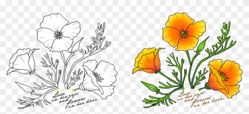 Poppy outline clipart vector transparent library California Poppy Flower Outline, HD Png Download - 1024x423 ... vector transparent library