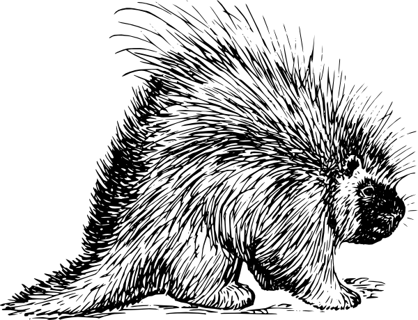 Porcupine clipart free banner stock Porcupine Rodent clip art (120642) Free SVG Download / 4 Vector banner stock