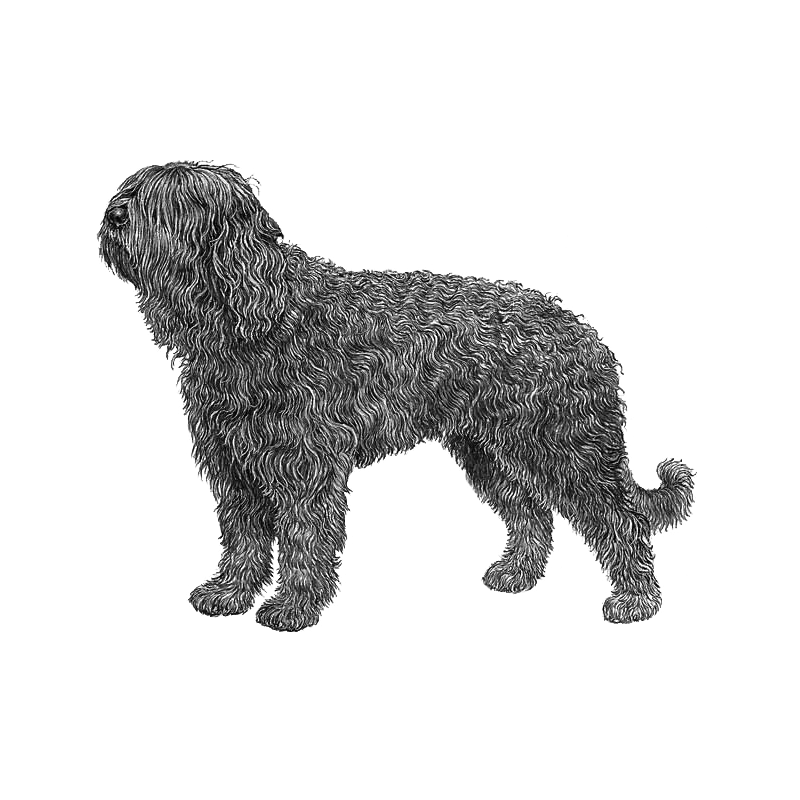 Portuguese water dog clipart clip freeuse stock Articles - DogWellNet.com clip freeuse stock