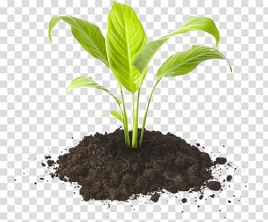 Potting soil clipart jpg library download Green leafed plant in soil, Potting soil Humus Compost ... jpg library download