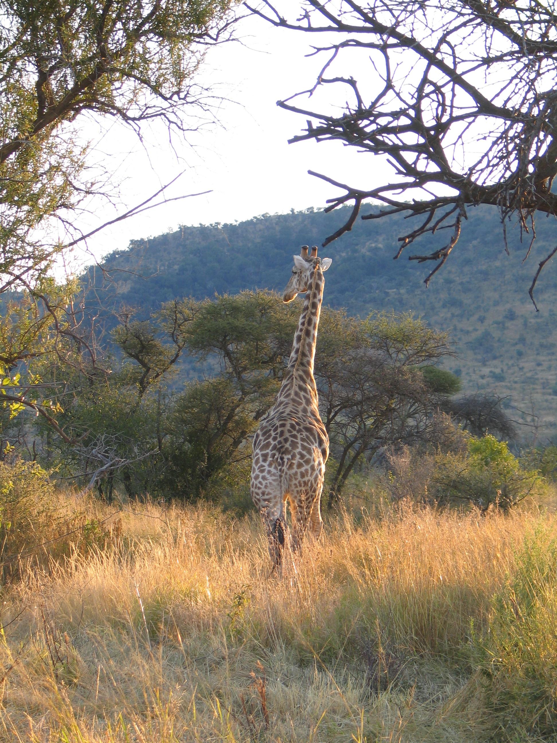 Pradera con rio clipart blanco y negro picture free Sabana arbolada de África austral - Wikipedia, la ... picture free