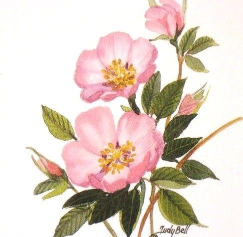 Prairie rose clipart jpg free Prairie Rose - Pink Wildflower Print - Watercolor Painting ... jpg free