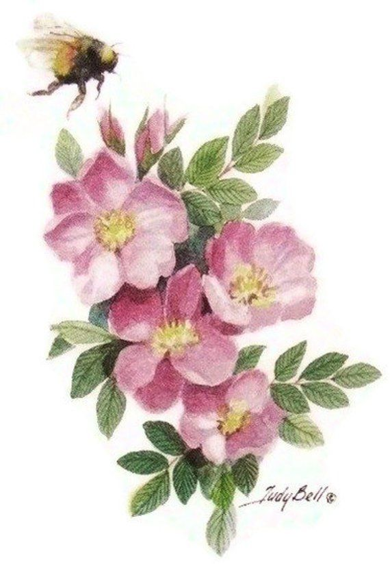 Prairie rose clipart picture freeuse Prairie Roses -Wildflower - Bumble Bee - Print - Watercolor ... picture freeuse