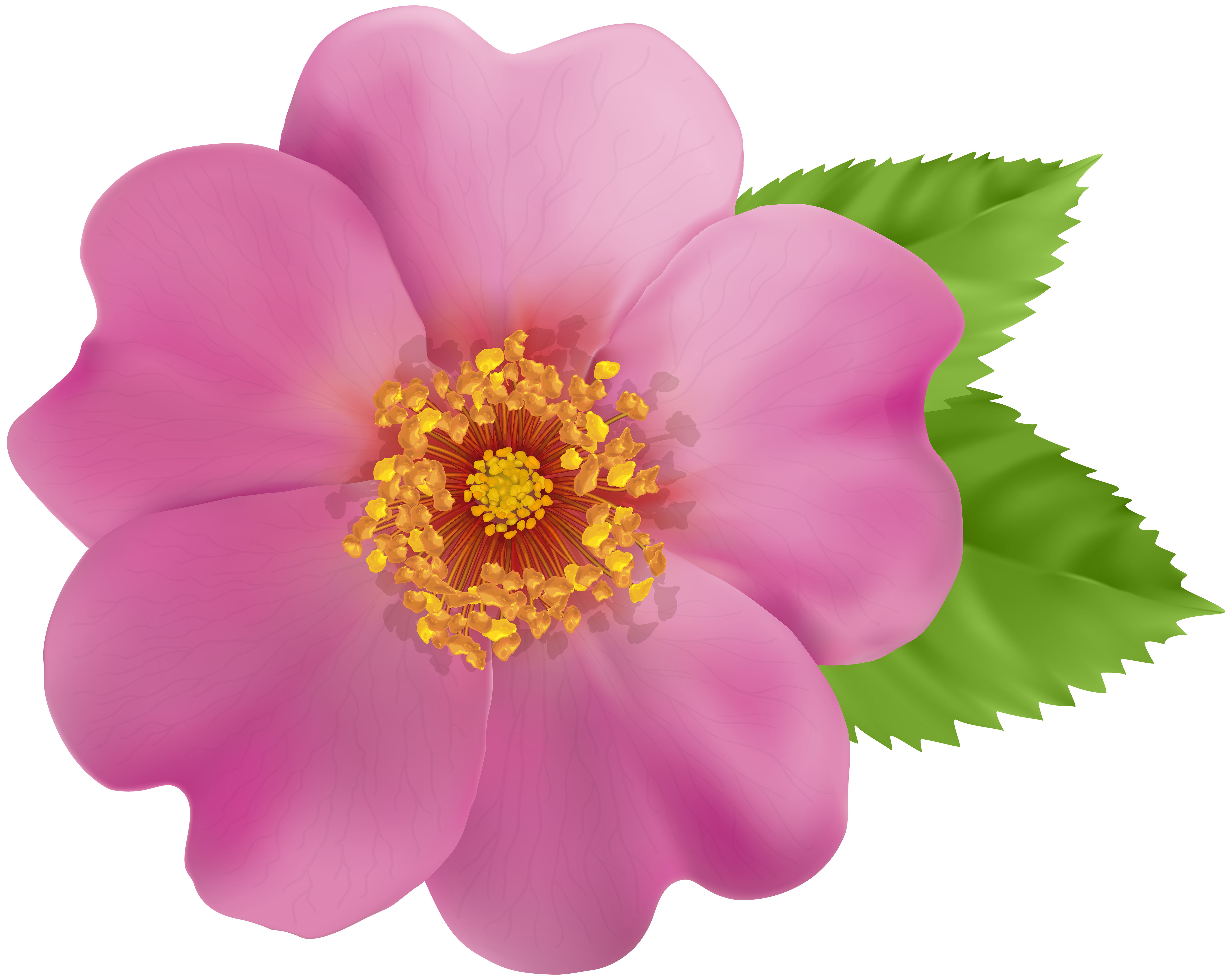 Wild rose clipart border picture transparent Wild Rose Flower PNG Clip Art Image | Gallery Yopriceville ... picture transparent