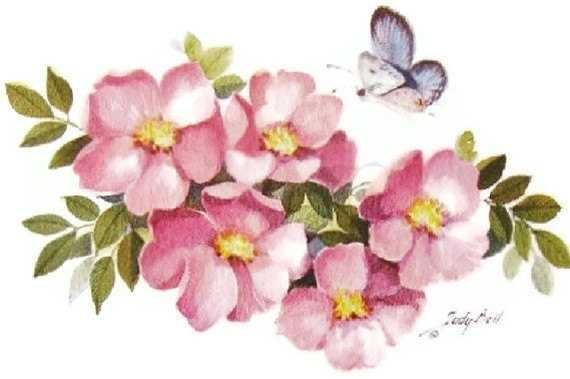 Prairie rose clipart clipart library Prairie Rose Wildflower - Butterfly - Watercolor art Print ... clipart library