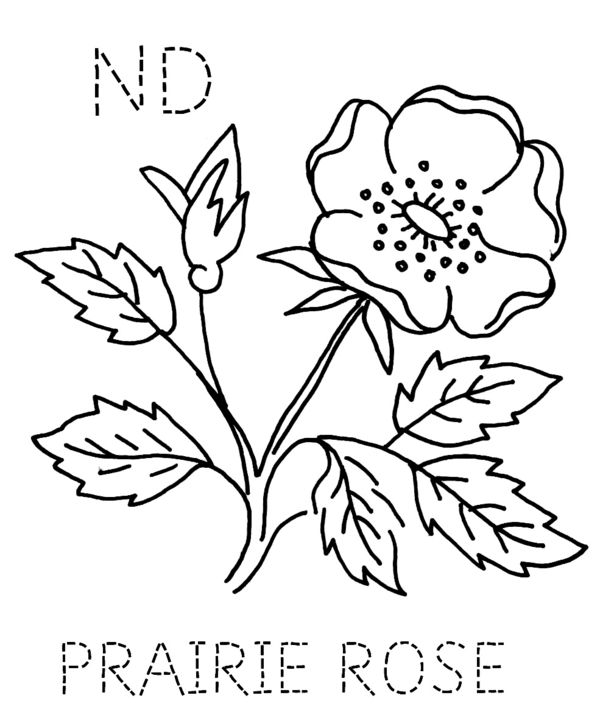 Prairie rose clipart png free library turkey feathers: NORTH DAKOTA -- Prairie Rose png free library