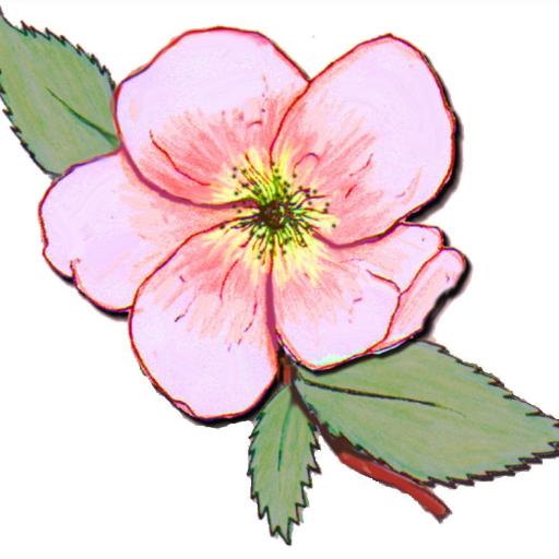Prairie rose clipart banner Welcome | Prairie Rose Chapter banner