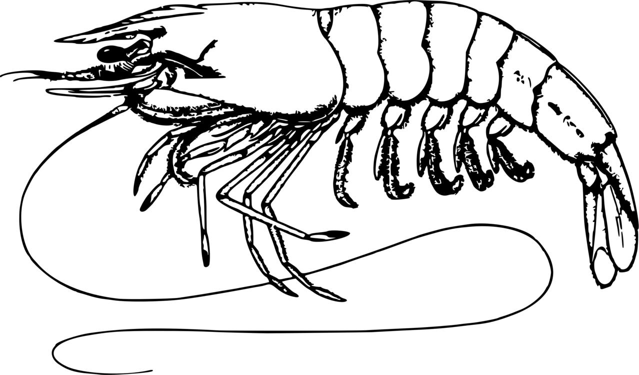 Prawn clipart black and white picture library stock Prawn clipart black and white 2 » Clipart Portal picture library stock