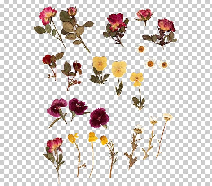 Pressed flower clipart picture free library Pressed Flower Craft Herbarium Flower Bouquet PNG, Clipart ... picture free library