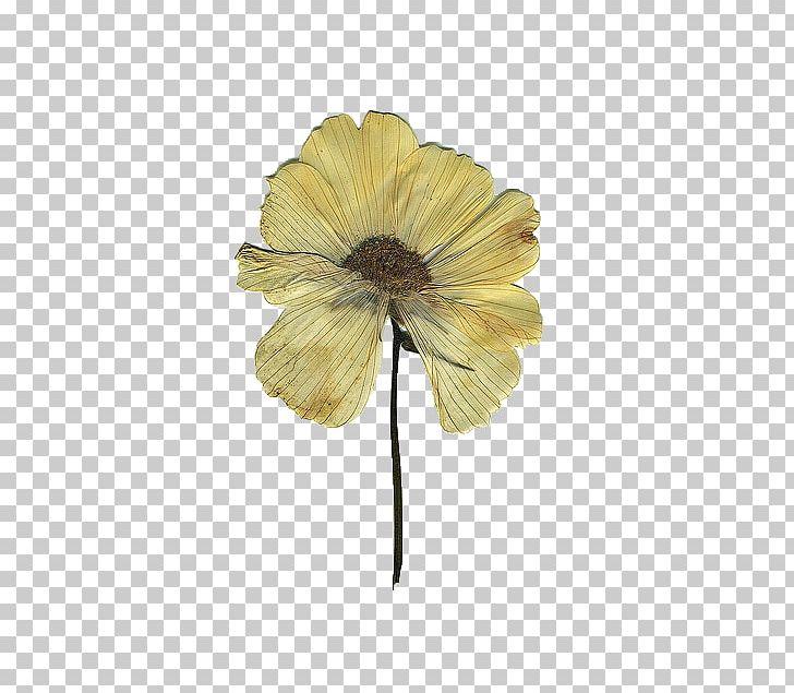 Pressed flower clipart vector transparent library Pressed Flower Craft Floral Design Drawing PNG, Clipart, Art ... vector transparent library