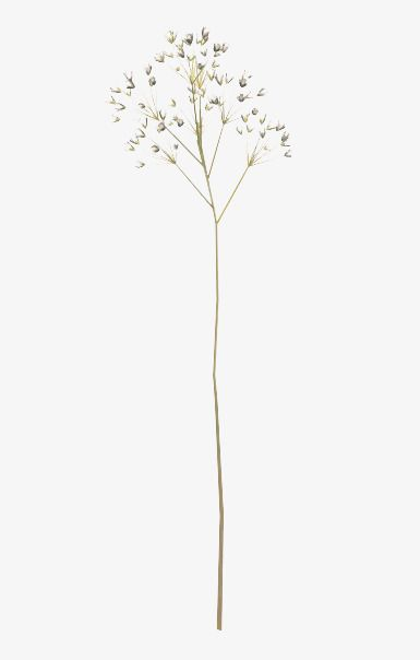 Pressed flower clipart picture freeuse download Dried Flower Sticks, Flower Clipart, Free Buckle, Dried ... picture freeuse download