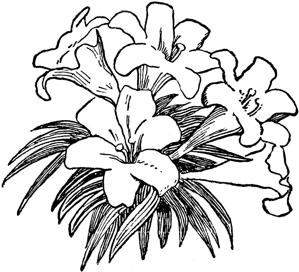 Pretty black and white flower clipart banner stock Flower black and white flower black and white flower clipart ... banner stock