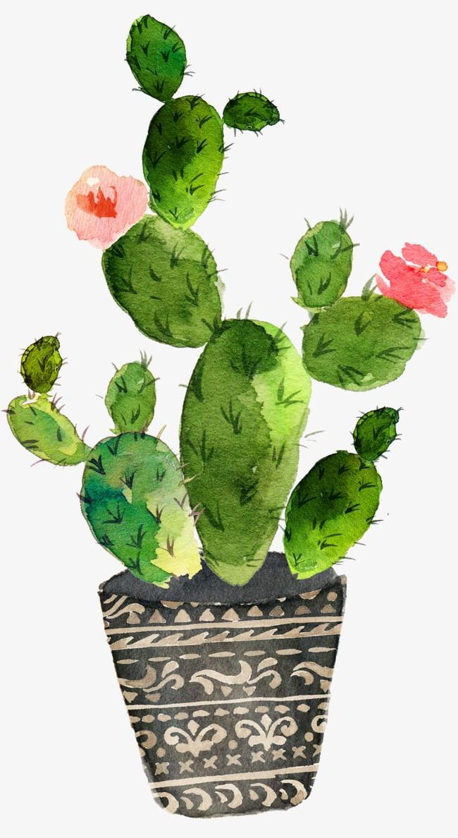 Prickly pear clipart clip royalty free Green Prickly Pear Cactus Bloom PNG, Clipart, Bloom Clipart ... clip royalty free