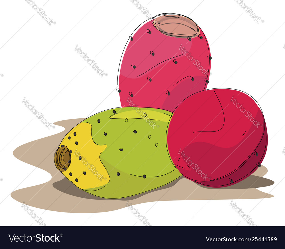 Prickly pear clipart clipart transparent download Clipart prickly pear fruits in red and clipart transparent download