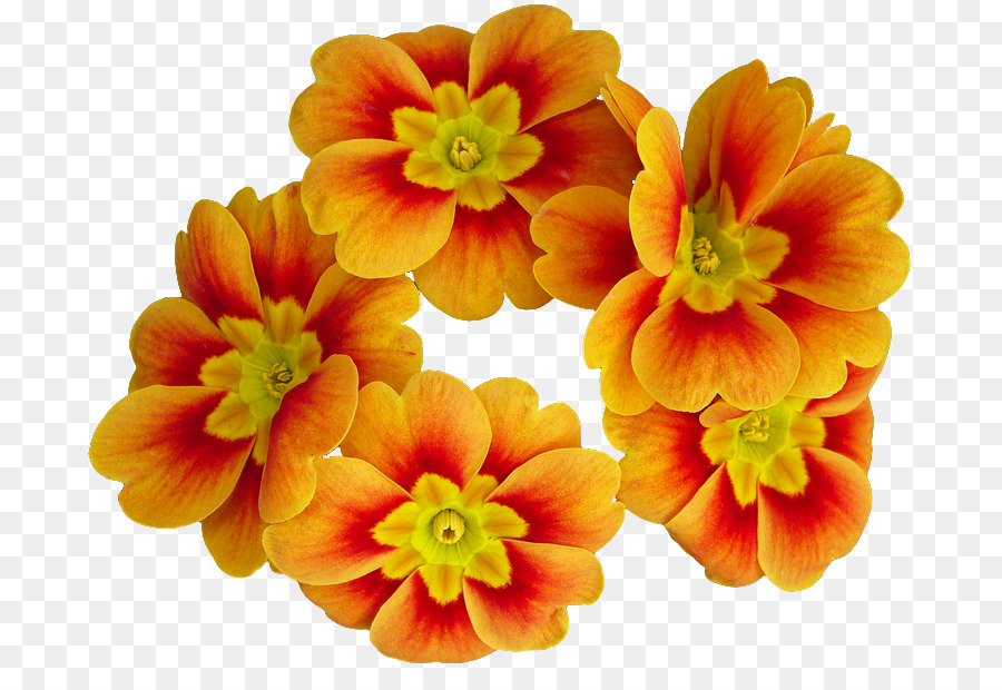 Primrose flower clipart graphic transparent Flowers Clipart Background png download - 761*602 - Free ... graphic transparent