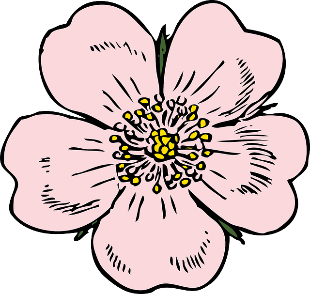 Primrose flower clipart