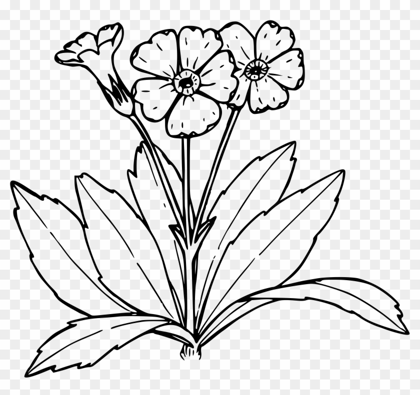 Primrose flower clipart png black and white Wildflower Clipart Black And White - Primrose Clipart Black ... png black and white