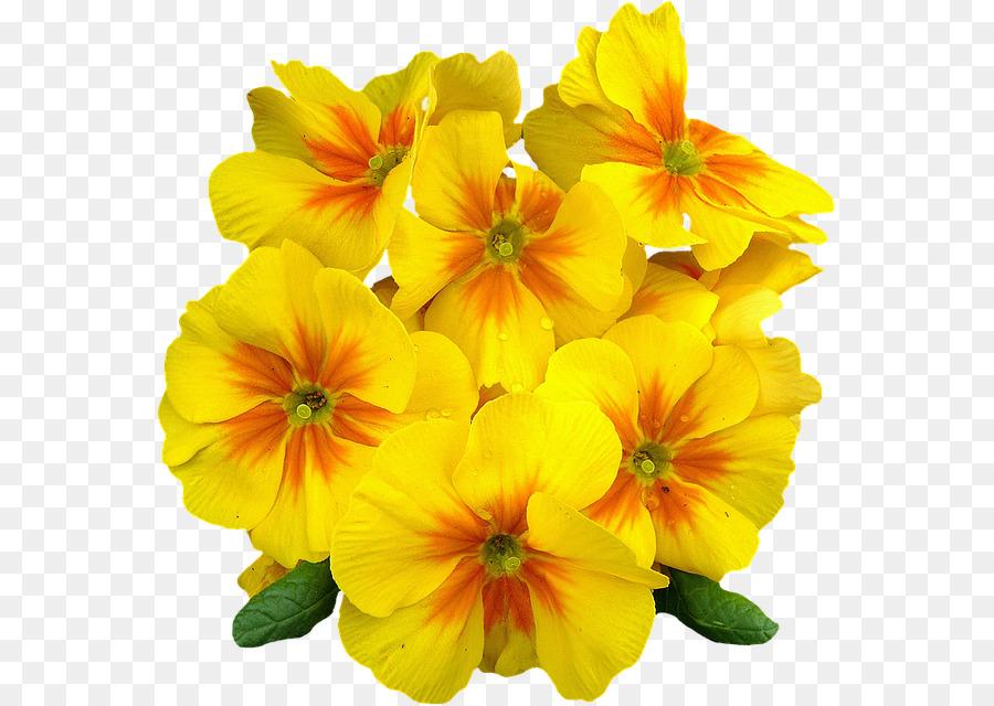 Primrose flower clipart jpg download Flowers Clipart Background png download - 618*640 - Free ... jpg download