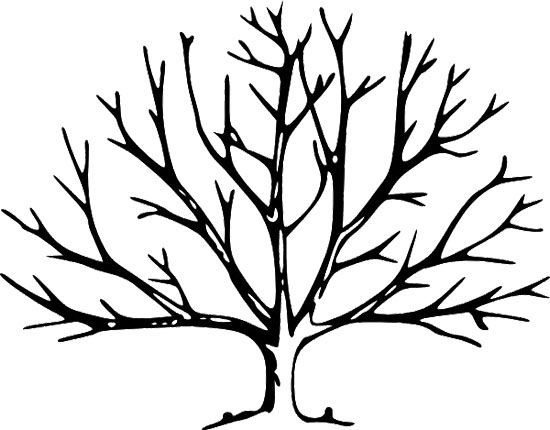 Trees without Leaves Coloring Pages | Coloring pages | Tree ... clip black and white stock