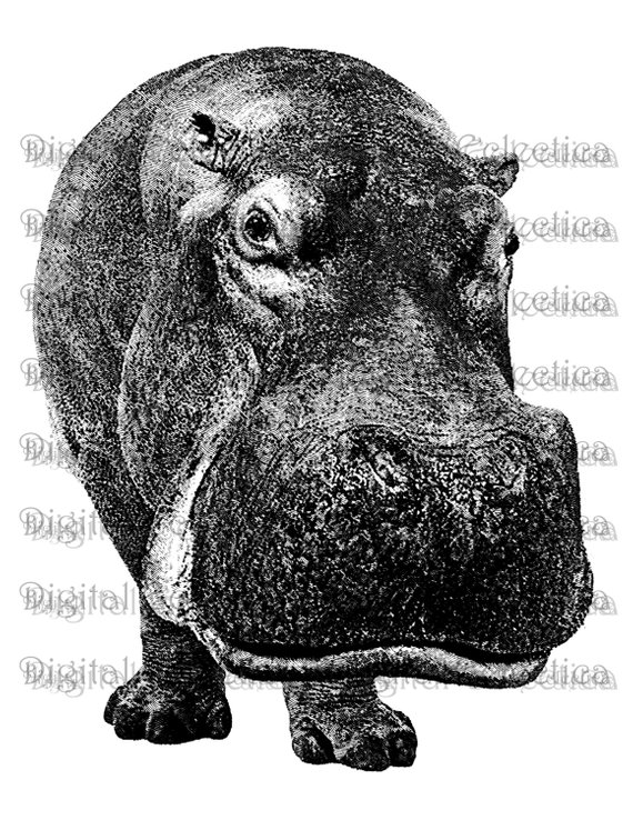 Profile of hippo clipart picture royalty free stock Hippopotamus Engraving. Hippo PNG. Hippo Prints. Hippo ... picture royalty free stock