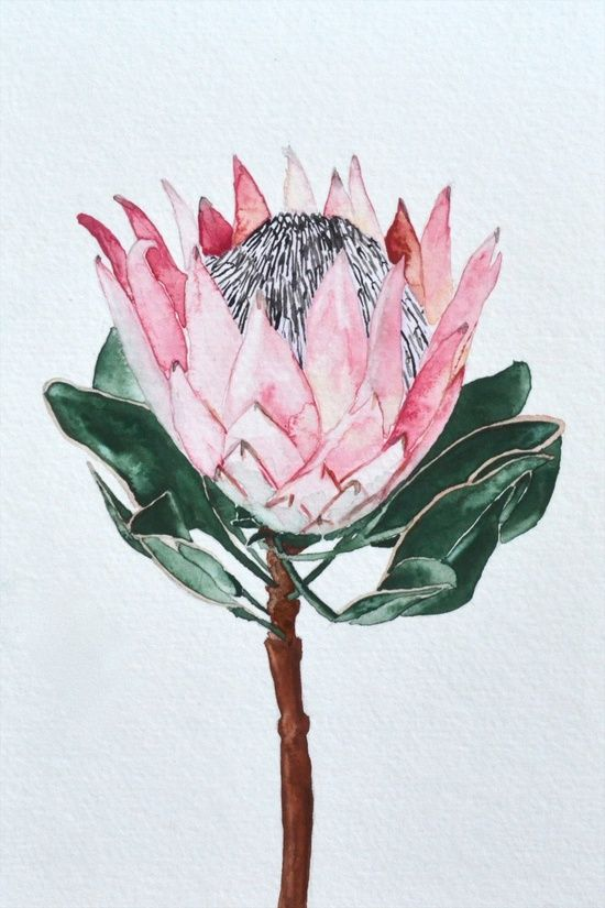 Protea clipart png library library Lotus Clipart protea flower - Free Clipart on Gotravelaz.com png library library