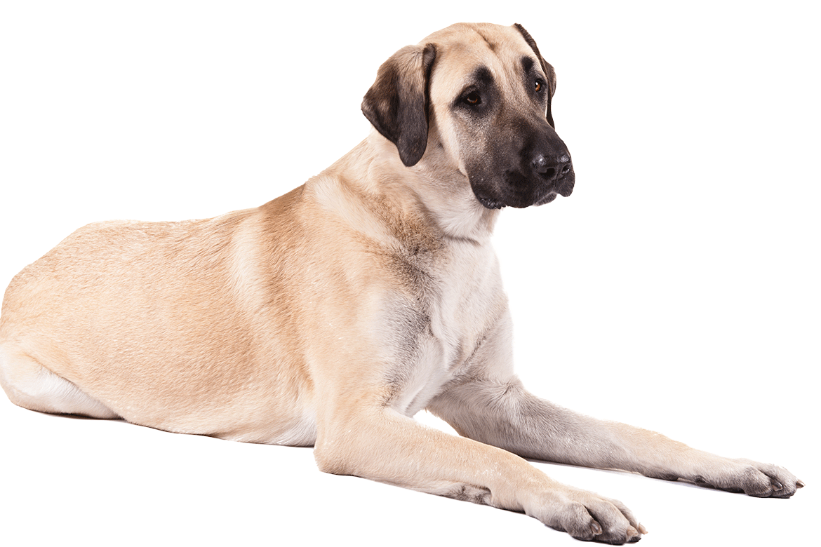 Protection dog clipart graphic royalty free stock Dog png image, dogs, puppy pictures free download graphic royalty free stock