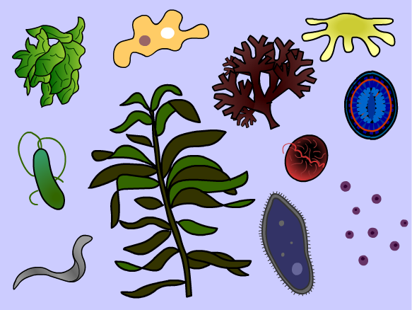Protist clipart clip royalty free library Free Protist Cliparts, Download Free Clip Art, Free Clip Art ... clip royalty free library