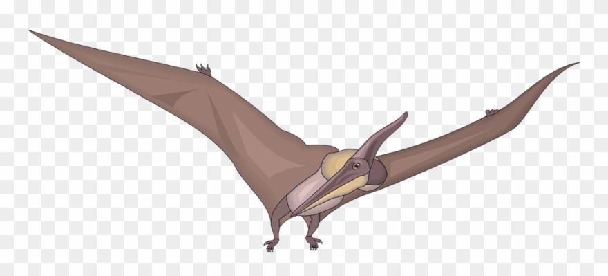Pterodon clipart clip art library Pteranodon Clipart - Png Download (#1518468) - PinClipart clip art library