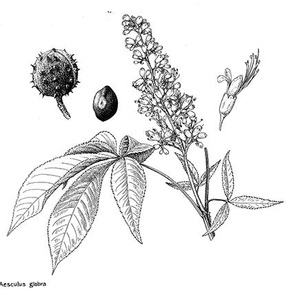 Public domain plant images image black and white stock Catalogue of the Botanical Art Collection at the Hunt Institute ... image black and white stock