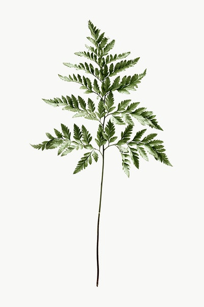 Public pictures domain free bronze fern on black backround clipart jpg download Royalty Free Iron Stock Photos | rawpixel jpg download
