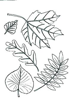 Public pictures domain silver plated tree leaf clipart png freeuse stock 144 Best Clip Art Leaves images in 2019 | Leaves, Leaf ... png freeuse stock