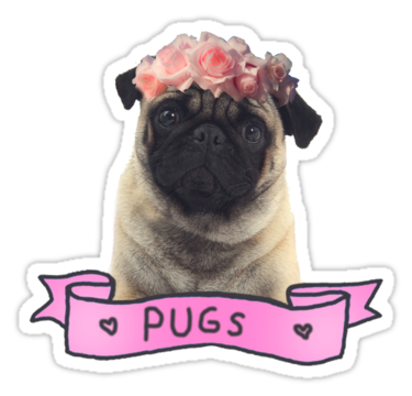 Pug tumblr clipart svg royalty free PUG | Sticker | Cute stickers! | Pugs, Stickers, Pug pictures svg royalty free