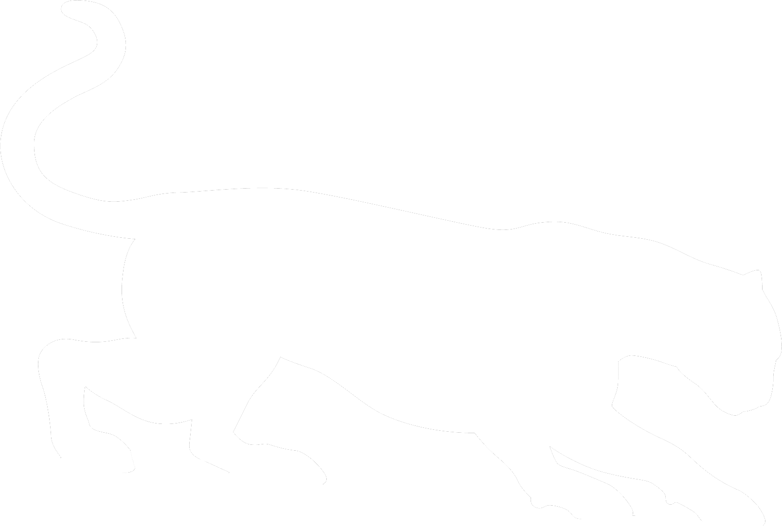 Puma cat eye clipart png freeuse Star Cougar | Carolina Tiger Rescue png freeuse
