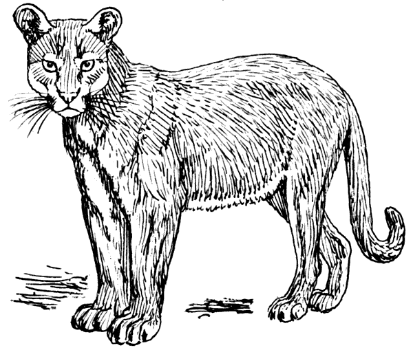Mountain lion clipart black and white library Free Puma Clipart, 1 page of free to use images library