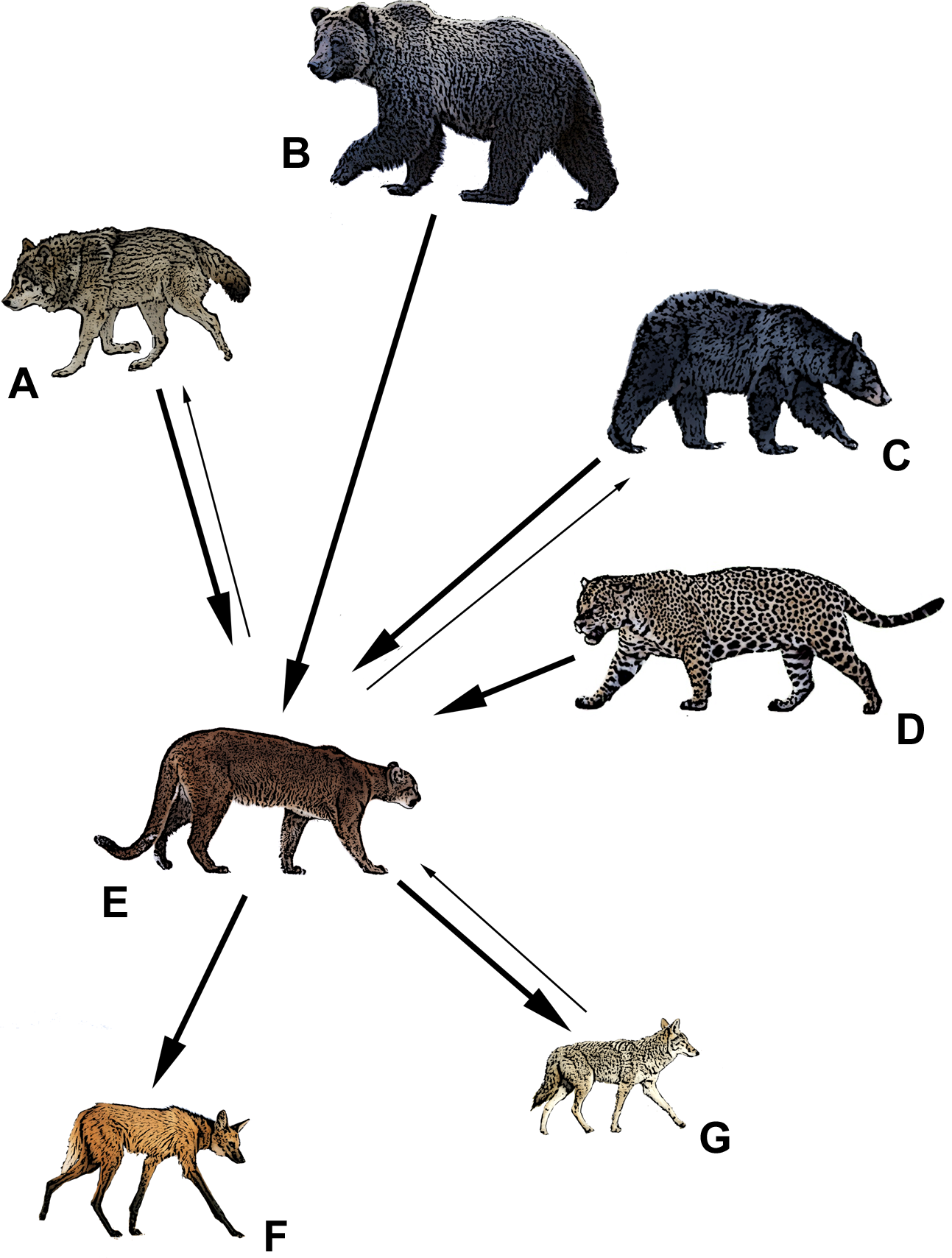 Puma energy clipart graduate program jpg library stock Are pumas subordinate carnivores, and does it matter? [PeerJ] jpg library stock