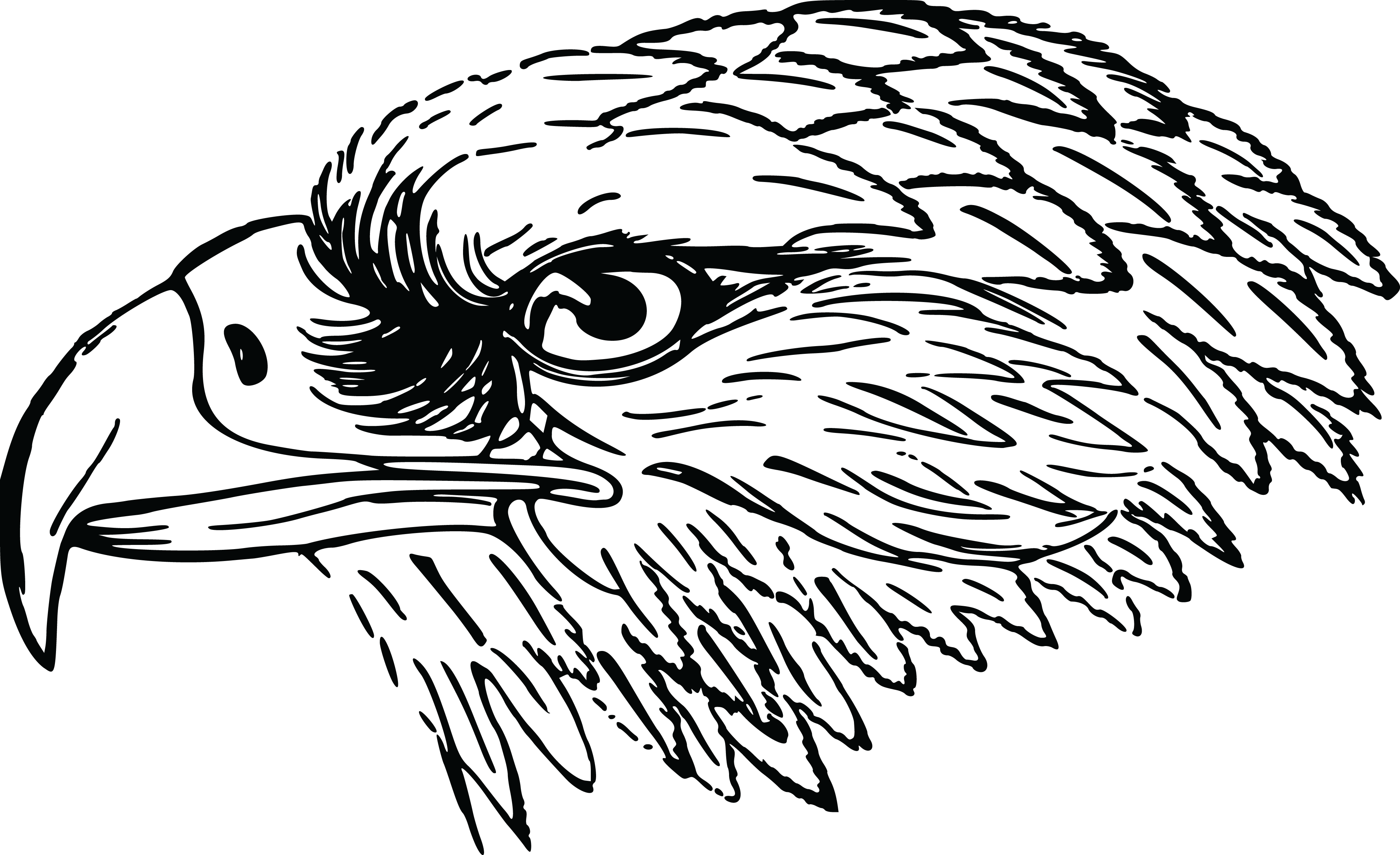 Pumpkin clipart black and white jep banner black and white Eagle Clip Art Black and White | Free Clipart Of A Black and White ... banner black and white