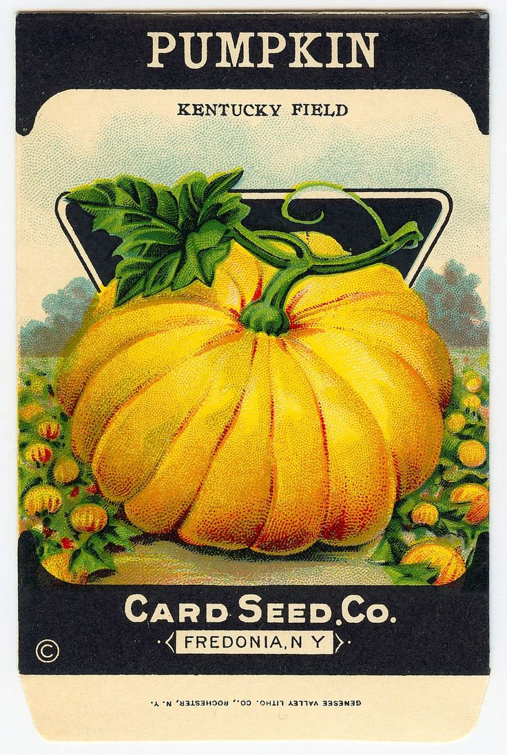 Pumpkin clipart row image library library 1000+ ideas about Vintage Seed Packets on Pinterest | Seed packets ... image library library