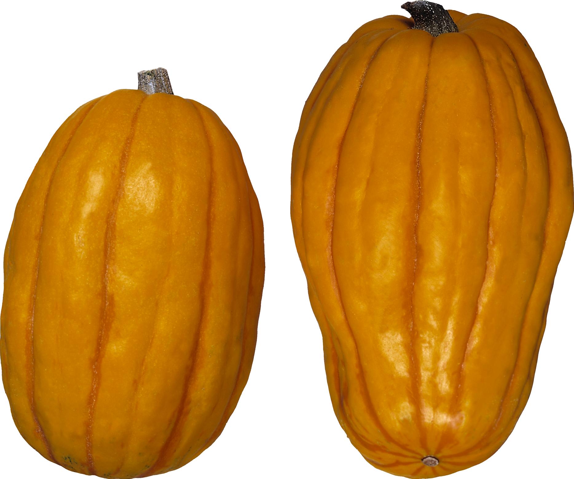 Pumpkin garden clipart png clip art transparent stock Pumpkin PNG images free download clip art transparent stock