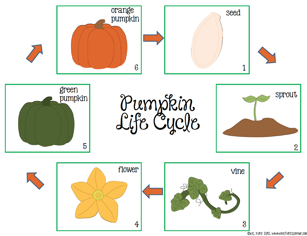 Pumpkin life cycle clipart banner black and white stock Pumpkin Life Cycle Clipart - Clipart Kid banner black and white stock