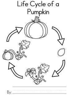 Pumpkin life cycle clipart banner black and white library Pumpkin Life Cycle Sequence Activity | Pumpkins, Clip art and Life ... banner black and white library