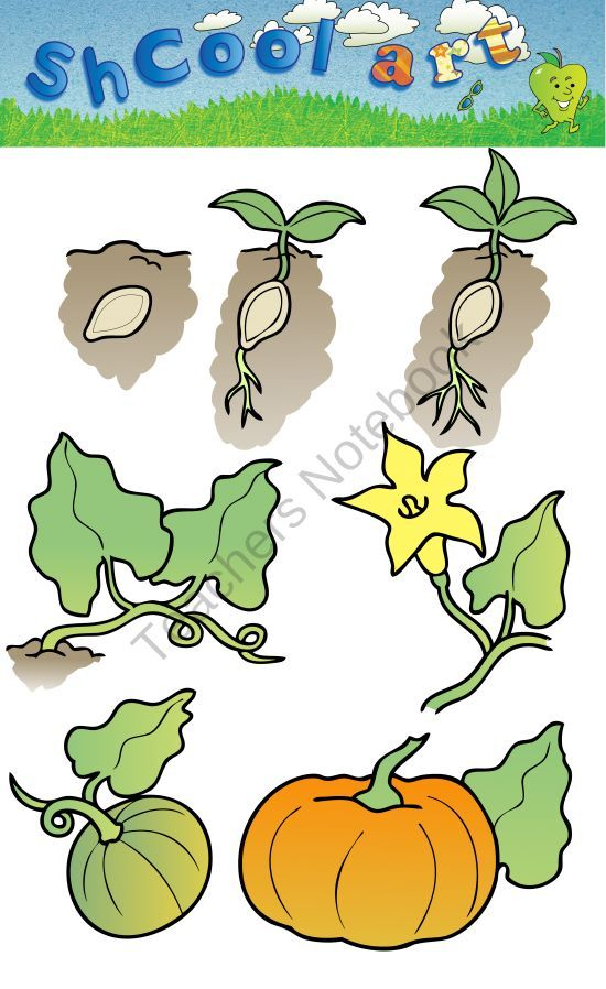 Pumpkin life cycle clipart picture free pumpkin life cycle clipart - Google Search | Cycles in Science ... picture free
