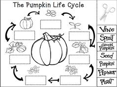 Pumpkin life cycle clipart clip transparent download Pumpkin life cycle clipart - ClipartFest clip transparent download