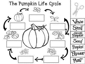 Pumpkin life cycle clipart vector download 17 Best ideas about Pumpkin Life Cycle on Pinterest | Pumpkin ... vector download