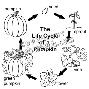 Pumpkin life cycle clipart image black and white Science Pumpkin Clipart - Clipart Kid image black and white