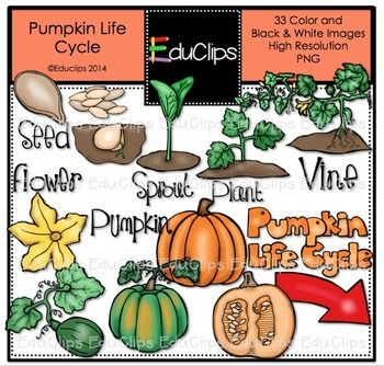 Pumpkin life cycle clipart clip library stock Pumpkin Life Cycle Clip Art Bundle {Educlips Clipart} | Colors ... clip library stock