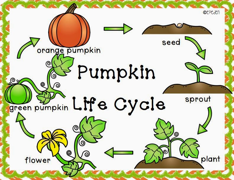 Pumpkin life cycle clipart transparent stock A Neighborhood Kindergarten : Pumpkin Patch CCSS Math, Science ... transparent stock